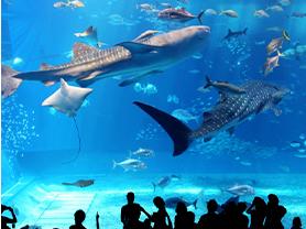 美ら海水族館(車で約4分)